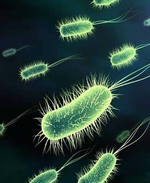 Наличие бактерий в питьевой воде может привести к тяжелым заболеваниям