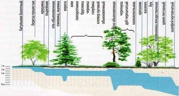 Поиск места для колодца может помочь провести сама природа (см. описание в тексте)