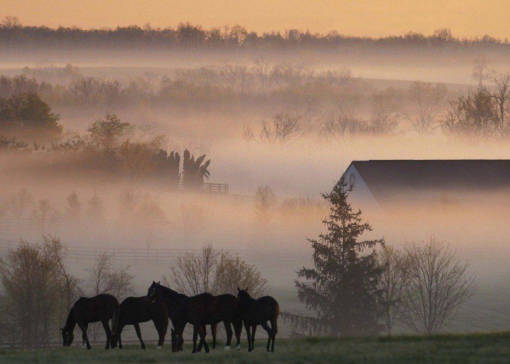 Туман над деревней