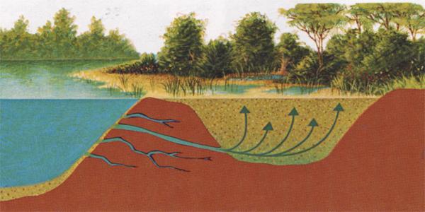 Настоящий плывун рядом с водоемом.