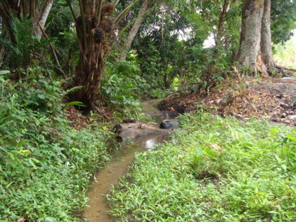 Несмотря на явную близость воды, бурить в этой низине не стоит.