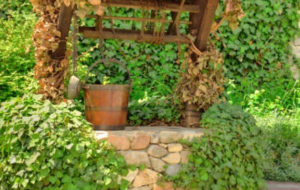 Вьющиеся растения на колодце